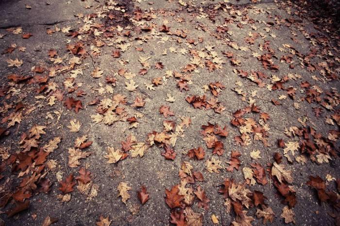 AutumnAtHighPark1