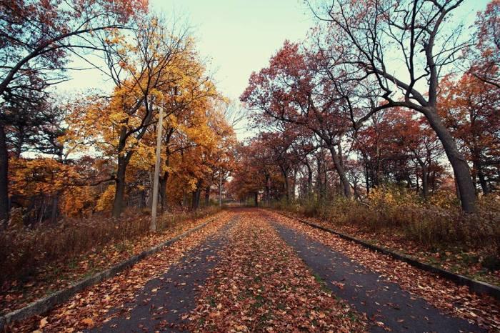 AutumnAtHighPark2