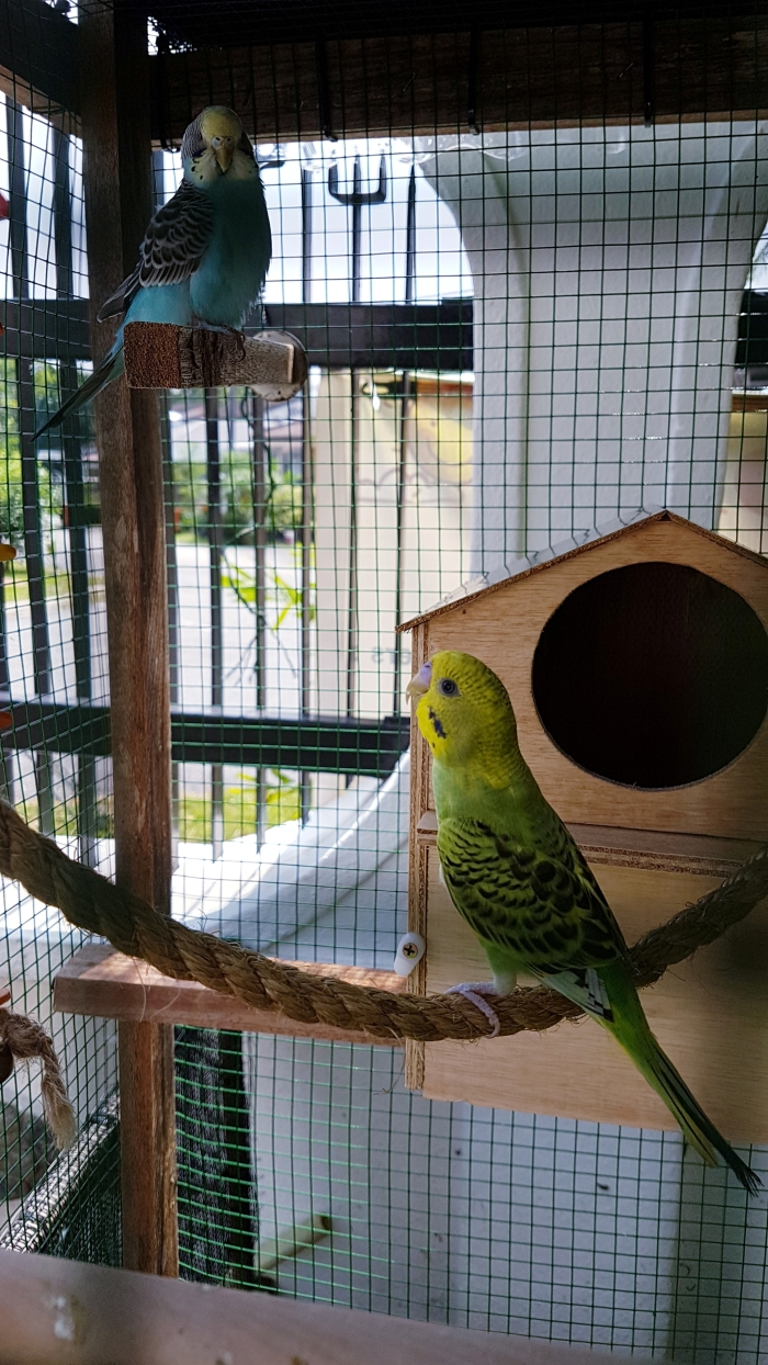 Lost & Found in their new aviary